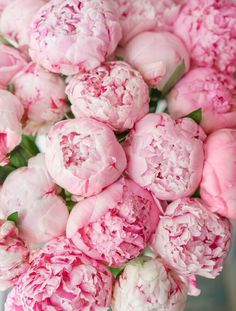 Beautiful bouquet of pink peonies . lovely flowers in Peonies Bouquet, Pink Peonies, Bouquets, Ranunculus Boutonniere, White Ranunculus, Pretty Flowers, Pink Flowers, Exotic Flowers, Peony Flower