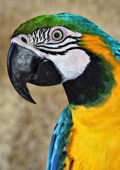 I had a parrot but Father made me let it go because we taught it some bad words. It didn't go plumb away though, it comes back every once in a while! (Kingsolver 117)
