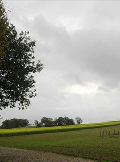 Mosterd veld kollenberg Sittard