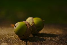 Twins   Flickr - Photo Sharing! Twins, Coconut, Fruit, Vegetables, Photos, Food, Pictures, Essen, Vegetable Recipes