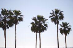 Cheap Travel Health Insurance - The Travel Ideas San Diego, Las Vegas, Packing List For Travel, California Dreamin', Cheap Travel, Seattle Skyline, Europe, Plants, California