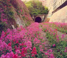 La ligne de Petite Ceinture, des rails de train abandonnés à Paris. La ligne de Petite Ceinture de Paris est une ancienne ligne de chemin de fer qui faisait 32 kilomètres de long. Celle-ci faisait le tour de Paris et a été désertée par les Parisiens à cause de la concurrence du métro. Le trafic a diminué, tronçons après tronçons pour finalement être arrêté en 1985 aux voyageurs. Une section de la ligne d'Auteuil a été intégrée en 1988 à la ligne C du RER.