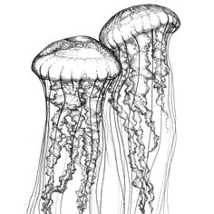 Two Sea Nettles, Renée Phillips