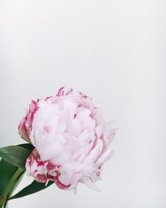 Processed with VSCO with preset - Blumen Vsco, Bloom And Wild, Pink Tone, All Flowers, Simple Elegance, Pink Peonies, Flower Delivery, Nature Pictures, How Beautiful