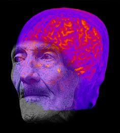 http://neuroantropologia.wordpress.com/2013/02/25/evoneuro/