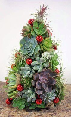 Succulent Christmas Trees (and instructions for DIY) Succulent Tree Succulent Centerpieces, Succulent Arrangements, Planting Succulents, Diy Christmas Tree, Holiday Tree, Christmas Decorations, Christmas Plants, Merry Christmas, Xmas