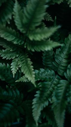shadow of days 🌿 plants dark nature bushes leaves leaves blatt - Illustration - Wallpaper Dark Green Aesthetic, Nature Aesthetic, Aesthetic Grunge, Aesthetic Vintage, Nature Wallpaper, Wallpaper Backgrounds, Trendy Wallpaper, Wall Wallpaper, Nature Sauvage