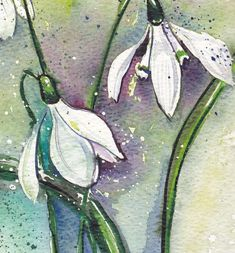 Buy Snowdrops, Watercolour by Julia Rigby on Artfinder. Watercolor Images, Watercolor And Ink, Watercolor Flowers, Watercolor Paintings, Watercolor Ideas, Watercolours, Art Floral, Image Halloween, Image Nature Fleurs