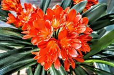 """Spring is Coming"" #photobydperry #repostromanticitaly #padova #padua #italy #italia #noidiroma #myrome #europe #europa ##wp #discoverglobe #topeuropephoto #travel #instagood #instatravel #amazing #landscapes #loves_venezia #incredible_italy #awesome_earthpix #Italia_super_pics #ig_italy #ig_padova #loves_united_hdr #going_into_details #loves_veneto #universitàdipadova #ortobotanico #ortobotanicodipadova"