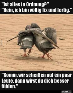 """""""Ist alles in Ordnung?"""" """"Nein, ich bin völlig fix und. Satire, Epic Texts, Friday Humor, Retro Humor, Minions Quotes, Sarcastic Quotes, Really Funny, Funny Photos, True Stories"""