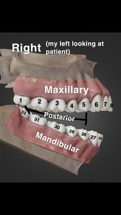 I'm new to the Dental Assisting world so I made this for myself to memorize th. - I'm new to the Dental Assisting world so I made this for myself to memorize th. Dental Jobs, Dental Hygiene Student, Dental Life, Dental Hygienist, Rda Dental, Dental Facts, Dental Assistant Humor, Dental Videos, Dental Anatomy