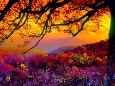 Very Colorful Sunset