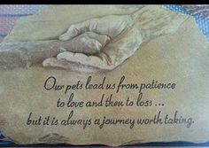Our pets lead us from patience to love and then to loss...but it's always a journey worth taking...