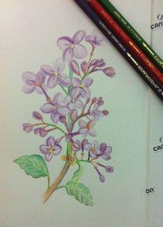 Floral 1 by Daniele Silva, via Behance
