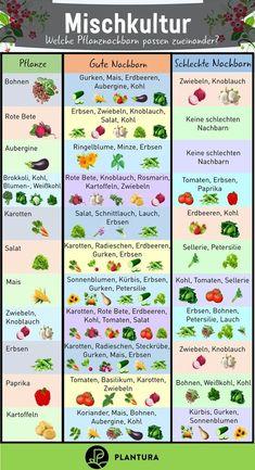 Planting Vegetables, Vegetable Garden, Amazing Gardens, Beautiful Gardens, Outdoor Play Areas, Best Perennials, Wedding Art, Garden Projects, Lush