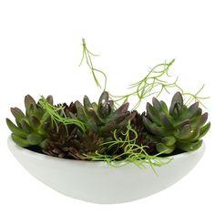Artificial Mixed and Succulent Desk Top Plant in a Pot