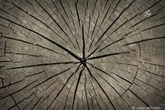 Rustic wall art Circle of Life 4x6 inches fine art by VaidaPhoto