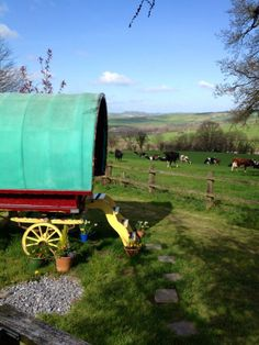 Old Oak Gypsy Wagon, Carmarthenshire. The wagon in the afternoon sunshine and our milking cows in a field on our family run organic dairy farm http://www.organicholidays.co.uk/at/3177.htm