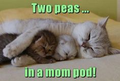 Celebrate Mother's Day With Some of Our Favorite Mom Cat Memes
