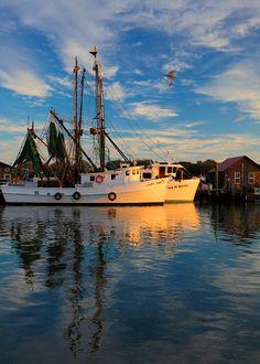 Shrimp Boats and Gull, Shem Creek,