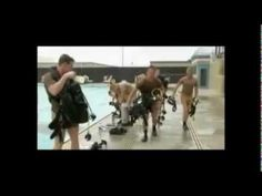 How to Increase Mental Toughness: 4 Secrets From Navy SEALs and Olympians   TIME