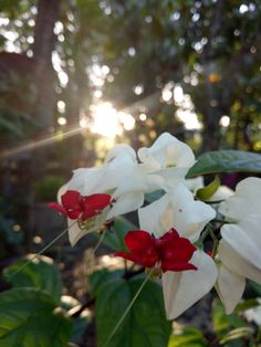 Bunga pengantin #flowers