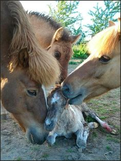 The Wonderment of a Precious New Life ♥   (10 Beautiful Photos)