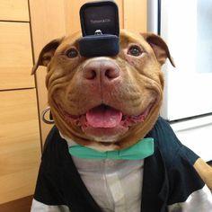 Depuis qu'il a été adopté, ce chien ne peut plus s'arrêter de sourire ! On craque pour son incroyable bouille !