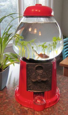 DIY Pets: Gumball Machine Fish Bowl Great for a class pet, just make sure you break the coin slot and turn knob so nobody tries to buy your fish. DIY Pets: Gumball Machine Fish Bowl Great for a class pet, just make sure you b. Aquarium Original, Animal Projects, Diy Projects, Pet Goldfish, Goldfish Tank, Goldfish Bowl, Diy Gumball Machine, Cool Fish Tanks, Do It Yourself Inspiration