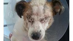 Heartless people blind dog with chemicals, dump the helpless animal on busy road in Ireland! | YouSignAnimals.org