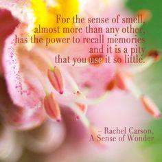 Super close up chestnut blossom with quote by Rachel Carson. #wonder #photography #flower #fleur #Rebekah West