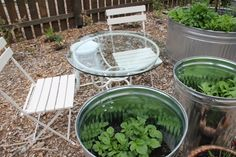 Anyone have an old stock tank that they aren't using! Raised garden ideas coming to my head!