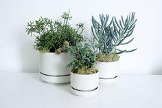 Mine are lovely - Arabia flower pots, design Richard Lindh 1964 Potted Plants, Cactus Plants, Indoor Plants, Plant Fungus, Concrete Garden, Container Plants, Growing Plants, Botany, Houseplants