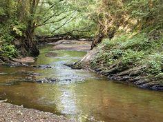 The Oconee River