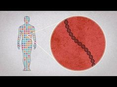 How did scientists learn to sequence the human genome? #TEDEd