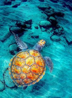lets enjoy ourselves seeing the beauty of ocean life under the sea, wow I love to watch all the creatures, with my own eyes, but I can't I don't study this or travel around countrie Beautiful Creatures, Animals Beautiful, Cute Animals, Beautiful Ocean, Simply Beautiful, Turtle Love, Happy Turtle, Ocean Creatures, Tier Fotos