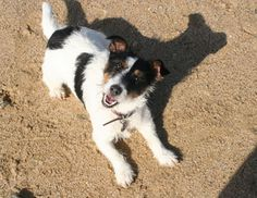 All About Cornwall, an up to date guide to Cornwall, including Cornwall Dog Guide which suggests Dog Friendly Days Out in Cornwall and useful information about dogs in Cornwall Days Out In Cornwall, Devon And Cornwall, Cornwall England, Camping Near Me, Camping Store, Camping Cabins, Campsite, Death Valley Camping, Santa Cruz Camping