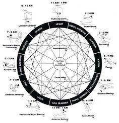How Energy Travels in the Body: The Meridian System and It's Effects on Your Health