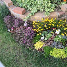 Entrance/ナチュラル/植物/ガーデニング/ガーデン/多肉植物...などのインテリア実例 - 2016-05-15 13:02:22