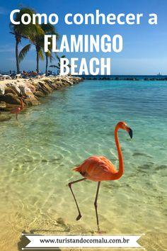 cef621ca59df 3 maneiras de conhecer a Flamingo Beach em Aruba. Uma ilha de flamingos cor  de