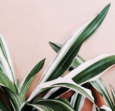 Plant contrasts reminiscent of tropical garden houses