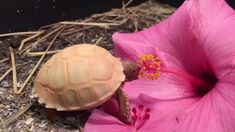 Albino tortoise eating a hibiscus flower. Eft Tapping, Foot Reflexology, Muscle Anatomy, Sports Massage, Lymphatic System, Michelle Lewin, Ronda Rousey, Boxing Workout, Wing Chun