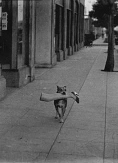 Leg it. Photo by silent film star Max Davidson in . Leg it. Photo by silent film star Max Davidson in . The post Leg it. Photo by silent film star Max Davidson in . Black White Photos, Black And White Photography, Funny Animals, Cute Animals, Vintage Dog, Tier Fotos, Mans Best Friend, Belle Photo, Dumb And Dumber