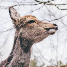 It's pretty common to encounter deers roaming around the forests of Switzerland, specially at dawn and dusk. Dawn And Dusk, Forests, Switzerland, Giraffe, Safari, Deer, Pretty, Animals, Giraffes