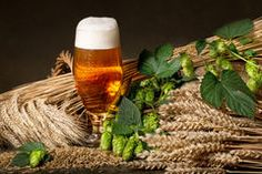 Beer, Wine and Brussels Sprouts – Their Toxic Link - Healthy Eating Tips, How To Stay Healthy, Malta, Beer Hops, Share Pictures, Web Design, Czech Recipes, Raw Materials, Beer Bottle