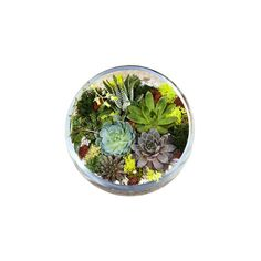 What You Need to Know About Making a Terrarium | These glass mini gardens are trendier than ever. Keep these basic tips in mind before you create or buy one of your own.