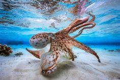 Winners of the 2017 Underwater Photographer of the Year (UPY) contest. How do you choose a favorite?