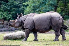 Самый большой ландшафтный зоопарк Европы