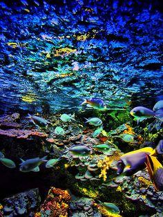 Go to the new aquarium.
