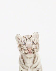 Pequeños Gigantes: ¡Increíbles Fotos de Animales Bebés! Más